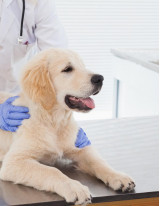 Animal Healthcare Market by Product and Geography - Forecast and Analysis 2021-2025