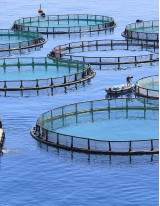 Aquaculture Market by Product, Environment, Culture, and Geography - Forecast and Analysis 2020-2024