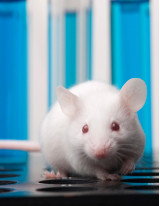 Humanized Mouse Model Market by Product, End-user, and Geography - Forecast and Analysis 2021-2025