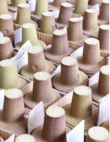 Global Phenolic Resin Market